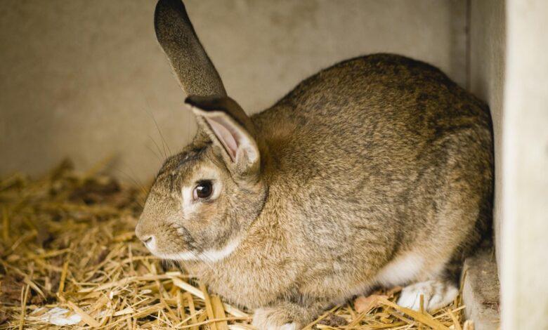 Comment nettoyer une cage à lapin