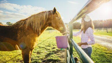 Photo de Comment nourrir votre cheval pour qu'il prenne du poids