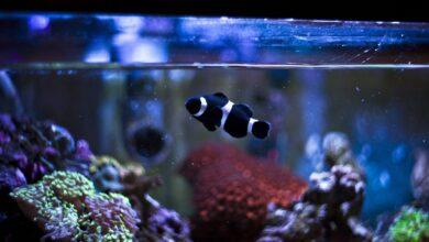 Comment réduire les nitrates dans un aquarium