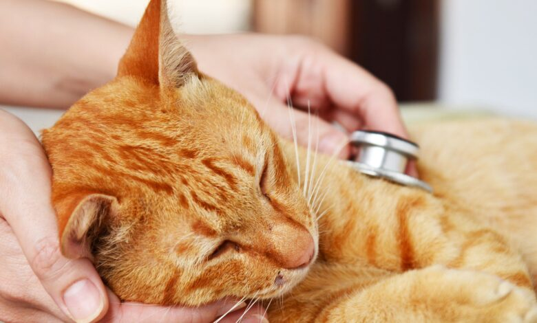 Comment savoir si votre chat souffre