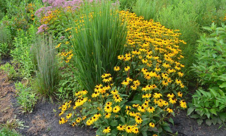 Concevoir un jardin de pluie fleuri