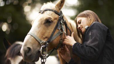Conseils pour choisir un morceau pour votre cheval