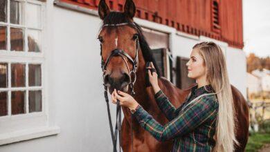 Conseils pour soigner un cheval qui n'aime pas être soigné