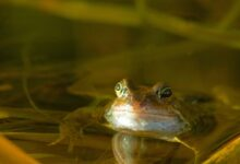 Construire un étang favorable aux grenouilles