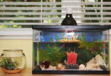 Conversion d'un aquarium d'eau douce à un aquarium d'eau salée