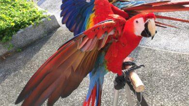 Photo de Corriger les mauvais comportements des oiseaux de compagnie