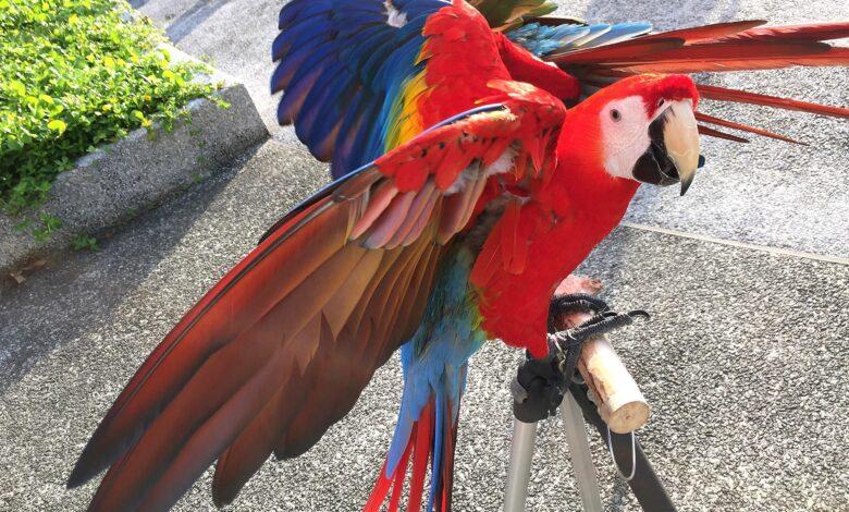 Corriger les mauvais comportements des oiseaux de compagnie