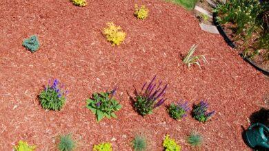 Création d'une plate-bande, choix et arrangement des fleurs