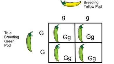 Croix monohybride : Une définition de la génétique