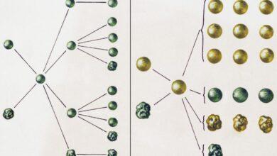 Définition et exemple de croisement de dihybrides