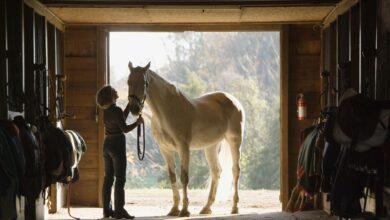Déterminer ce que peut coûter l'embarquement de votre cheval
