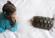 En savoir plus sur les tortues hivernantes