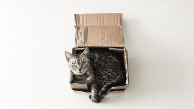Erwin Schrödinger et l'expérience du chat de Schrödinger