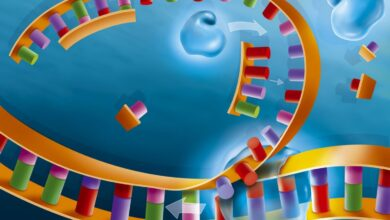 Étapes et processus de réplication de l'ADN