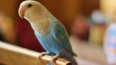 Photo de Évaluation de la condition physique d'un oiseau de compagnie