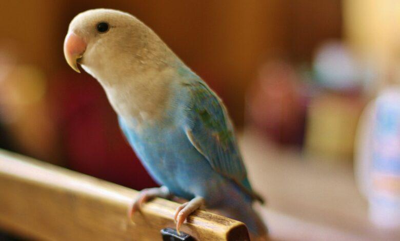 Évaluation de la condition physique d'un oiseau de compagnie