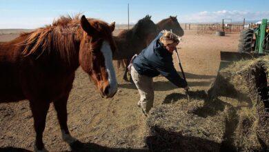 Faire durer le foin plus longtemps - Nourrir le foin des chevaux en cas de sécheresse et d'urgence
