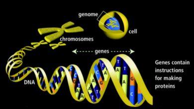 Gènes - Définition, fonction et mutations