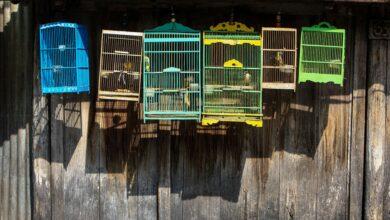 Guide pour la préparation et la peinture d'une cage à oiseaux