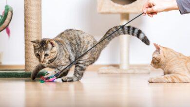 Idées d'enrichissement pour votre chat