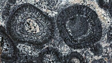 Identification des granitoïdes et autres roches de granit