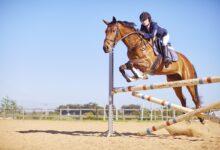 Introduction au saut d'obstacles en équitation