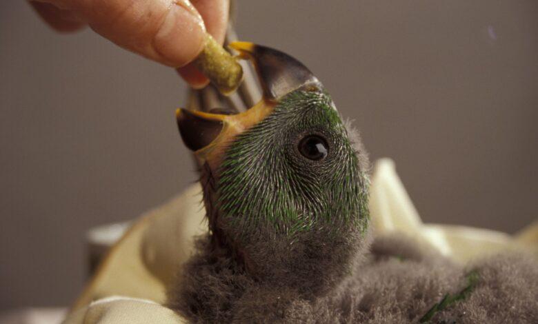 Introduire de nouveaux aliments pour les oiseaux de compagnie difficiles