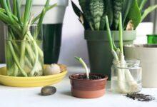 Jardinage en appartement pour les débutants
