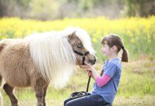 Jeux de chevaux et activités pour les journées de jeu