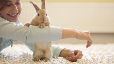 Jouets pour lapins faits maison - Jouets pour lapins de compagnie