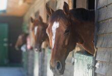 La BPCO, un vent violent ou des soulèvements chez les chevaux