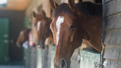 Photo de La BPCO, un vent violent ou des soulèvements chez les chevaux