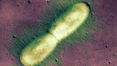 La cellule - Les cellules procaryotes et eucaryotes