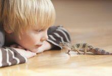 La salmonelle chez les reptiles et les amphibiens