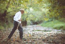 La théorie immunologique du vieillissement