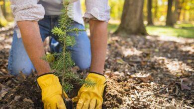 Le meilleur moment de l'année pour planter de nouveaux arbres