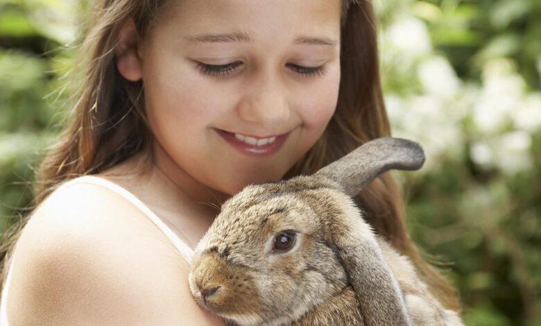 L'élevage et les soins des lapins en tant qu'animaux de compagnie