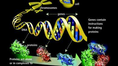 Les bases de la génétique