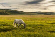 Les bases de la nutrition et de l'alimentation à l'herbe pour les chevaux