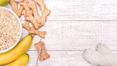 Les chiens peuvent-ils manger des flocons d'avoine ?