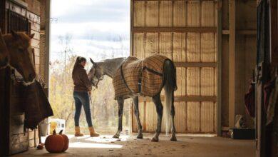 Les coûts de l'entretien d'un cheval