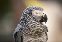 Les craintes nocturnes chez les oiseaux de compagnie