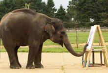 Les éléphants peuvent-ils vraiment peindre ?