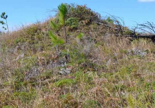 Vue d'un tumulus couvert de végétation sur l'île des Pins. (auteur fourni)
