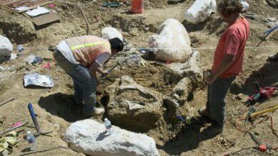 Les parcs publics qui permettent la collecte de fossiles