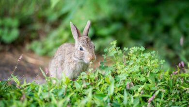 Les plantes Les lapins ne mangent pas
