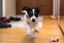 Les premières 24 heures avec votre nouveau chien