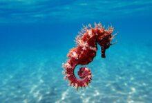 L'hippocampe est l'une des créatures les plus mortelles de la mer. Oui, les hippocampes.