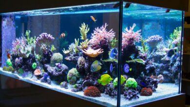 Lignes directrices pour la sécurité de l'empoissonnement des aquariums