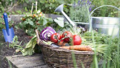 Liste de choses à faire pour le jardinage en juillet
